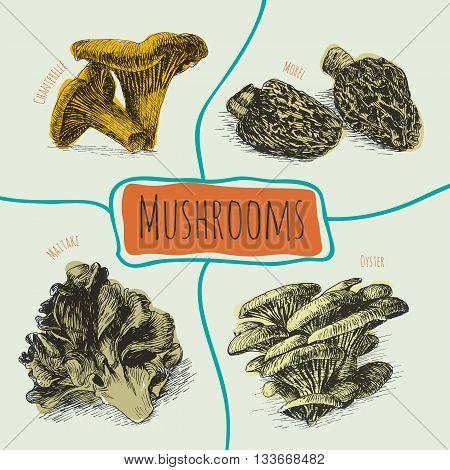 Vector mushrooms colorful set 2. Illustrative colorful sorts of mushrooms