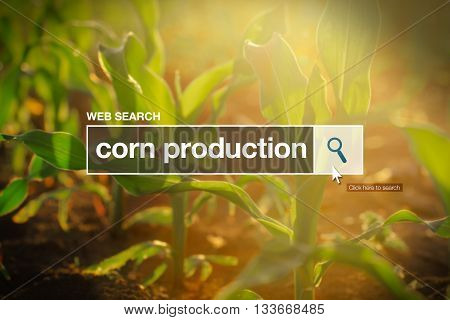 Corn production in internet browser search box maize field in background