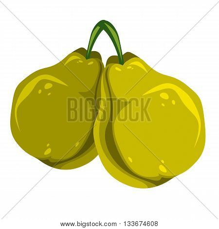 Harvesting symbol vector fruits isolated. Two organic green sweet pears healthy food idea design icon.