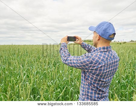 Farmer Photographing Wheat Plant In Field  Using Mobile Phone
