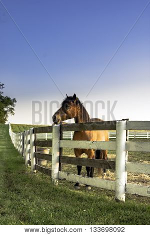 Horse standing behind a fence with blank blue sky - vertical format