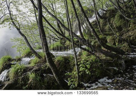 Stunning view of waterfalls in foggy forest.