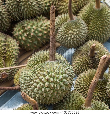 Long stem or Kan yao, a kind of durian in Thailand