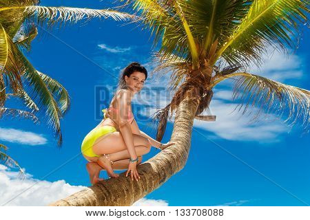 Young beautiful girl in bikini on the palm tree on a tropical beach. Tropical sky and sea in the background. Summer vacation concept.