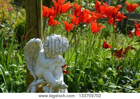 Angel statue and red tulips with pointed petals