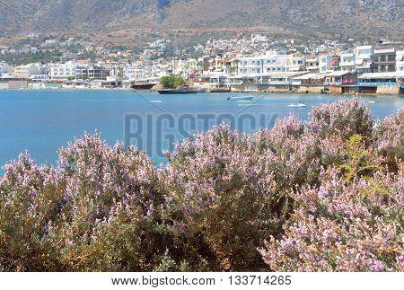 Flowering bushes on the coast of Cretan Sea and the city of Hersonissos Crete Greece.
