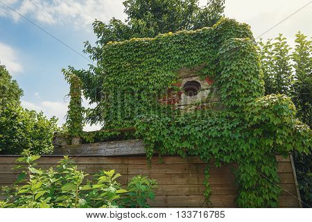 Wooden hut on the roof of a barn overgrown with ivy