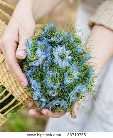 woman holding a bouquet of blue flowers in the hands of Nigella