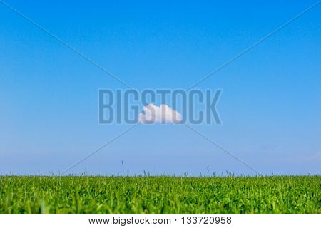 field and one cloud in the blue sky