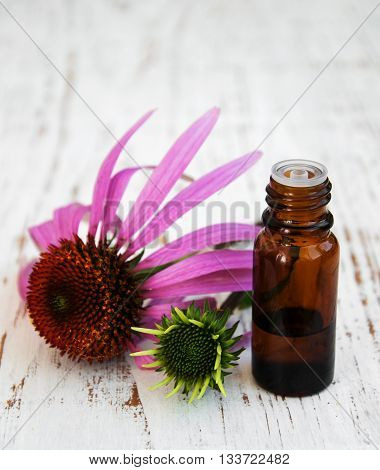 Bottle With Essence Oil With Purple Echinacea