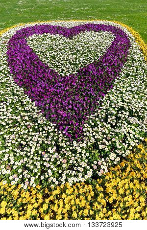 Flower bed in heart shape with yellow and purple pansies and white daisies