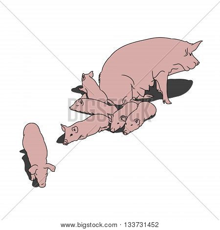 a pig and her piglets. The contoured silhouette pink pigs on a white background. Vector illustration