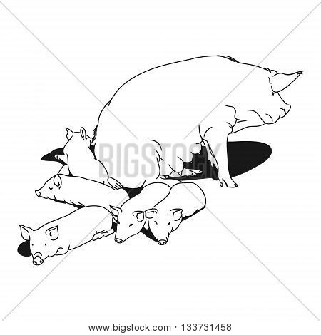 a pig and her piglets. Outline drawing of pig on white background. Vector illustration