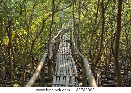 Landscape of bamboo walkway in mangrove forest. Selective Focus.