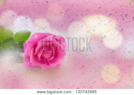 Single Pink Rose In Soft Mood Rain Water Drop And Bokeh Pink Background, Romantic Pink Rose With Bla