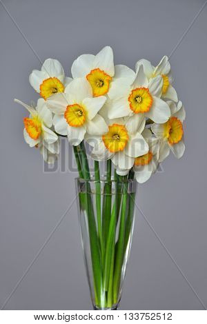 Narcissus Spring Flowers Bouquet Yellow White 1