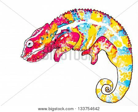 Beautiful chameleon on a white background .