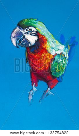 Beautiful parrot on a blue background .