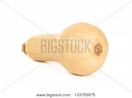 Butternut Squash Isolated