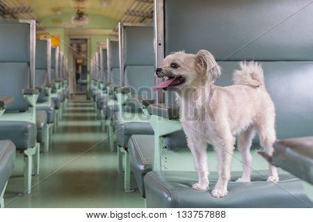 Dog Travel By Train