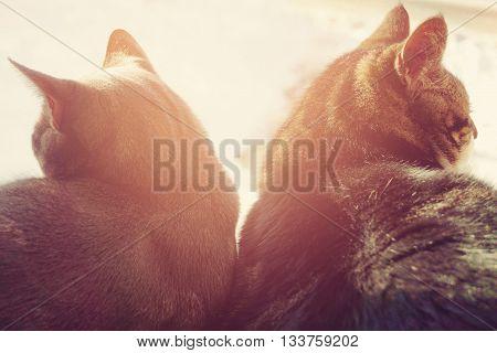 divorce concept - broken relationships - two cats