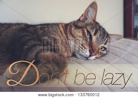Lazy cat on the couch with word Don't be lazy