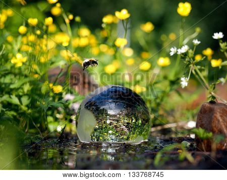 The ball in the water. Green water, forest flowers. Glass - a material, concepts and themes, environment, nature, renewable resources. flying bumblebee