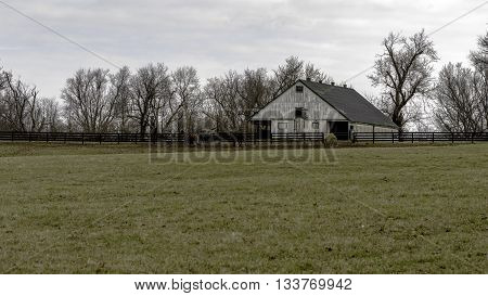 White barn with yearling horses in a pasture in background and blank foreground. 16 X 9 inch format