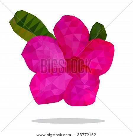 Beautiful hot pink of Desert Rose Flower Low polygon