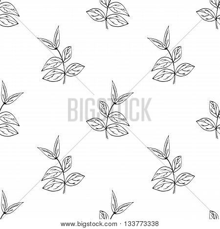 Vector seamless pattern with hand drawn herbs. Botanical background in black and white colours. Isolated. Textile design