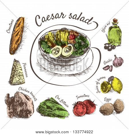 Vector illustration of Caesar salad ingredients. Hand drawn colorful illustration on white background