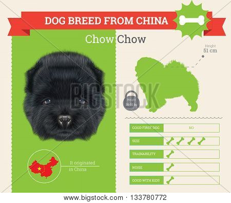 Chow Chow Dog breed vector infographics. This dog breed from China