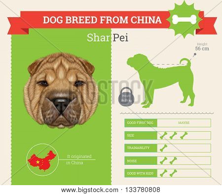 Shar Pei Dog breed vector infographics. This dog breed from China