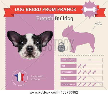 French Bulldog Dog breed vector infographics. This dog breed from France