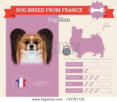 Papillon Dog breed vector infographics. This dog breed from France