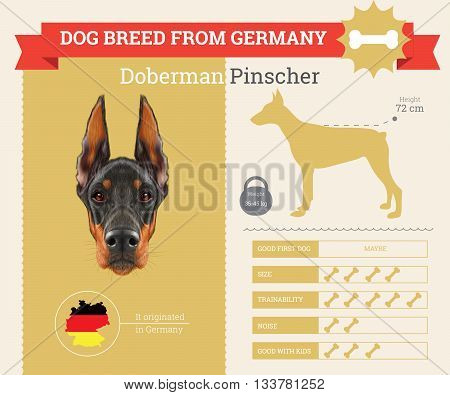 Doberman Pinscher Dog breed vector infographics. This dog breed from Germany