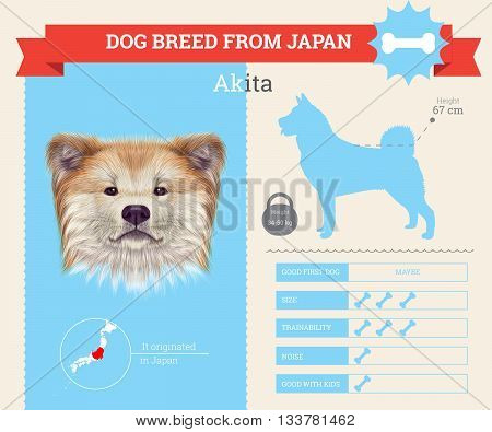 Akita Inu Dog breed vector infographics. This dog breed from Japan