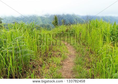 Walkway on the hill with grass beside