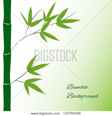 Branch and stalk of bamboo on a green background floral pattern
