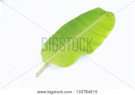 Green Banana Leaf Isolate On White Background ,green Banana Leaf Pattern With Clipping Path
