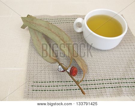 Cup of Eucalyptus tea for herbal medicine