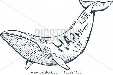 vector illustration with whale, nautical illustration with hand drawn lettering, vector whale silhouette