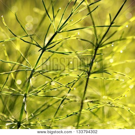 Picture of a Fresh dew drops at sunrise. Nature Background