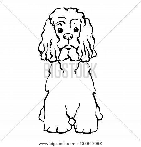 Sketch Funny dog American Cocker Spaniel breed sitting hand drawing vector