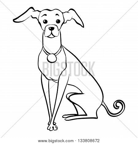 Sketch Funny dog Italian Greyhound breed sitting hand drawing vector