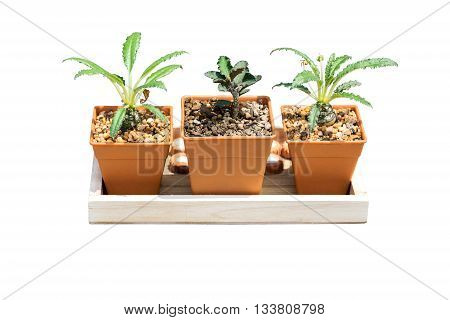 Plants grown in pots small for home and garden isolated on white background.