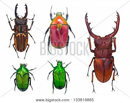 close up on beetle or bugs isolated on white background