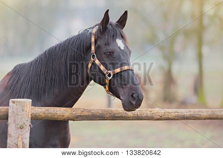 portrait of beautiful horse by the wooden fence