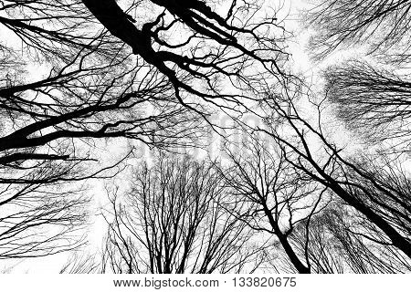 picture of branches on leafless trees in the forest
