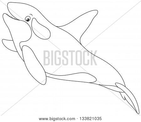 Black and white vector illustration of an orca swimming